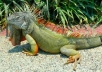 will give you reptile tips for the iguana