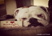  take a picture of my female bulldog with your message.. 