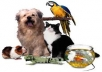 send you more than 1350 PLR articles about Pets