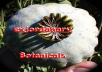 send u 500+ Super Colossus Papaver Somniferum Poppy Seeds