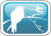 add 22000 High Quality real looking permanent twitter followers to your twitter account in less than 27 hours