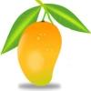 mangociti