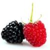 HarvestBerry