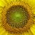 fibonaccilife