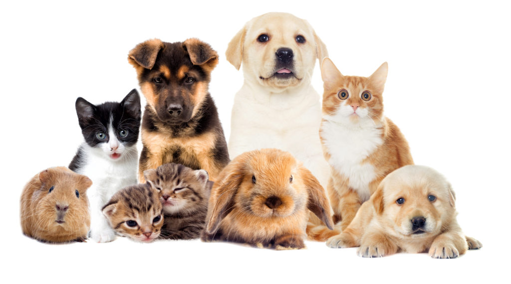 I will send you 1380 private label rights articles about pets