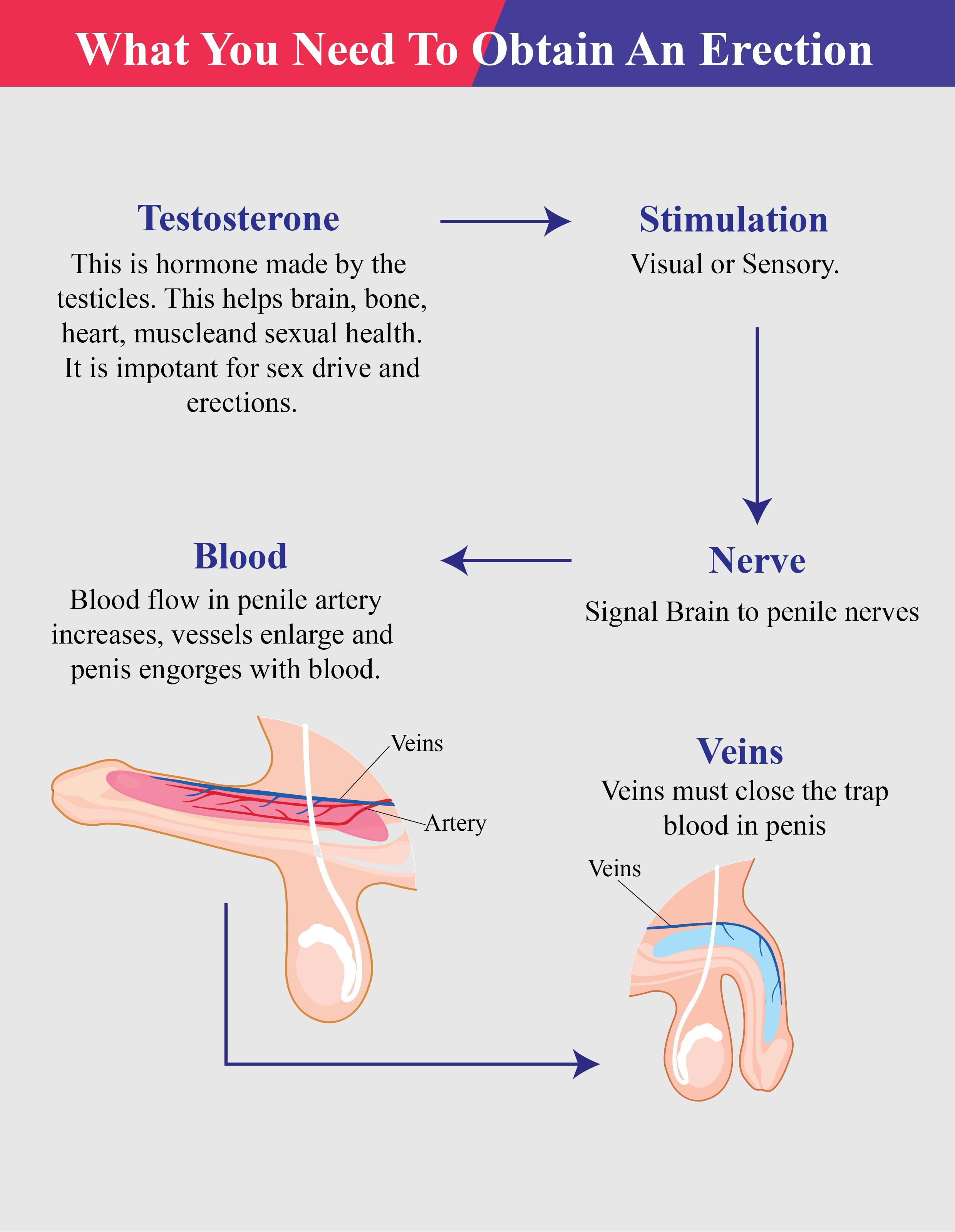 I will design superb medical,scientific illustration,infographic