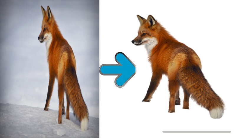 Your photo background removal service