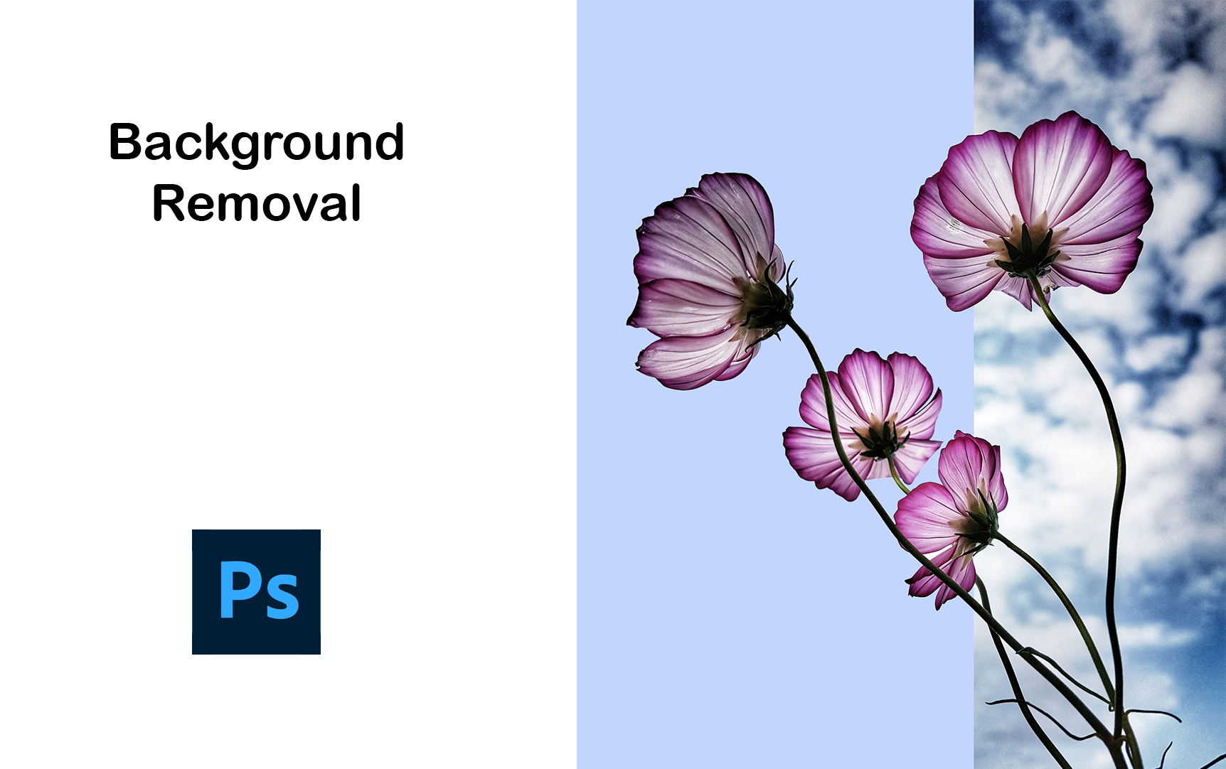 I will provide Image Background Removal & Clipping Path Service