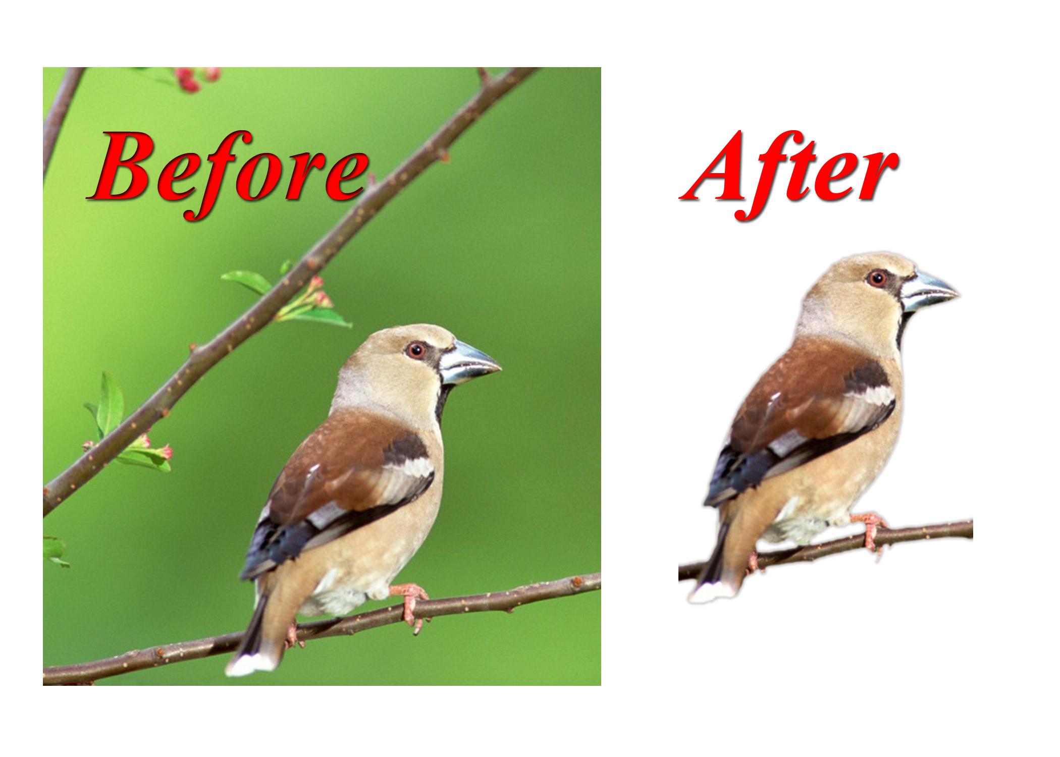 Remove 100+ image background professionally