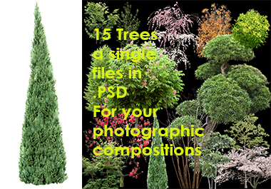 The graphics you want - 15 psd trees - perfect and precise