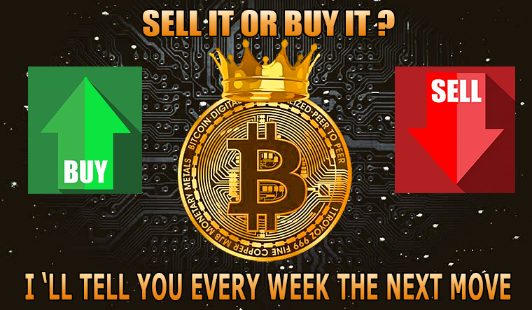 Forex and Bitcoin strategies every week
