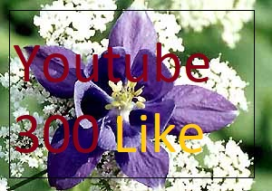i send you youtube seo 300 like instant very fast delivery time