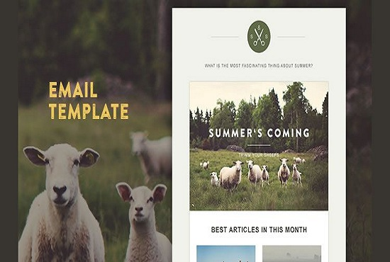 design a responsive email template