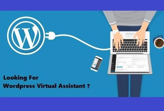 Wordpress Virtual Assistant - Blog Maintenance and Su...