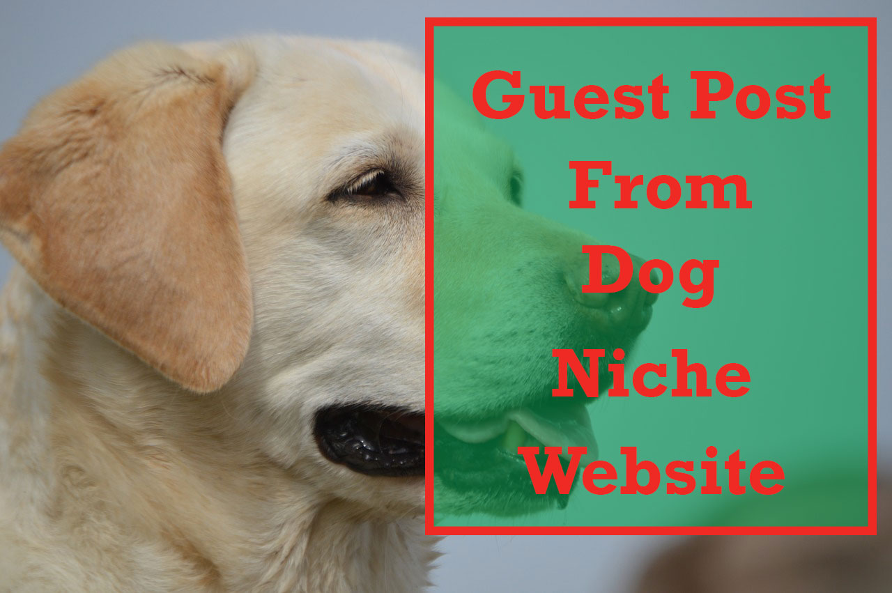 Two Dog Niche Guest Post