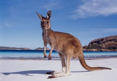 improve your Australian resume or cover letter