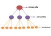 make-Super-Link-Pyramid-300-Wiki-Links-12000-Blog-for-12