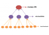 create 8 web 2 sites linkwheel with high seo power google authority domains of pr 5 pr 8