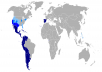 Spanish SEO. SEO for 5 Keywords in Spanish