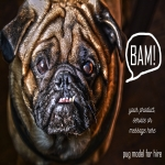 Provide 2 HQ Pug Model Photos with Your Logo or Message